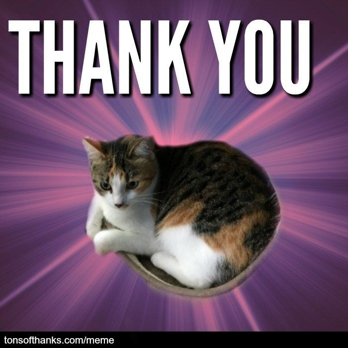 51 Nice Thank You Memes With Cats Thank You Memes Thank You Cat Meme Memes