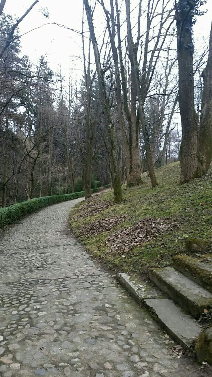 Botanical garden,Cluj