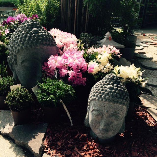 Budha medituje u nás v zahradním oddělení.
