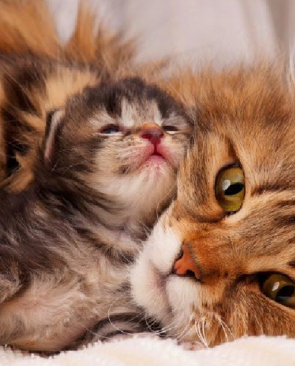 Baby Cats and Kittens meowing playing video Compilation