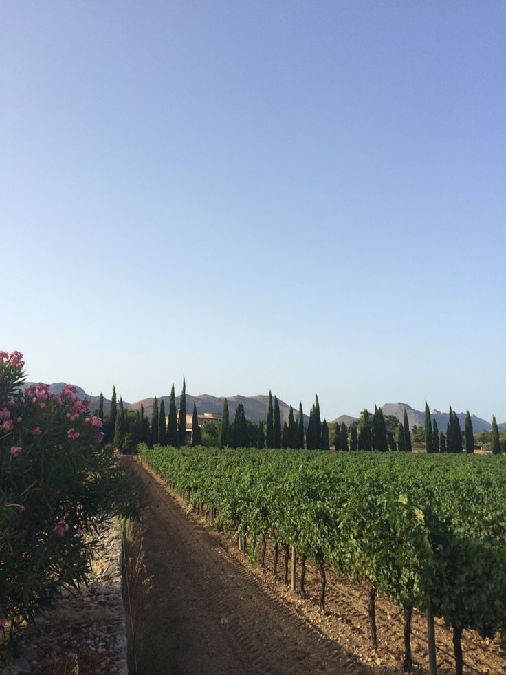 Mallorca C'an Vidalet Winery