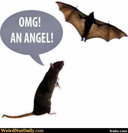 Rat Angel Meme Generator - Captionator Caption Generator - Frabz