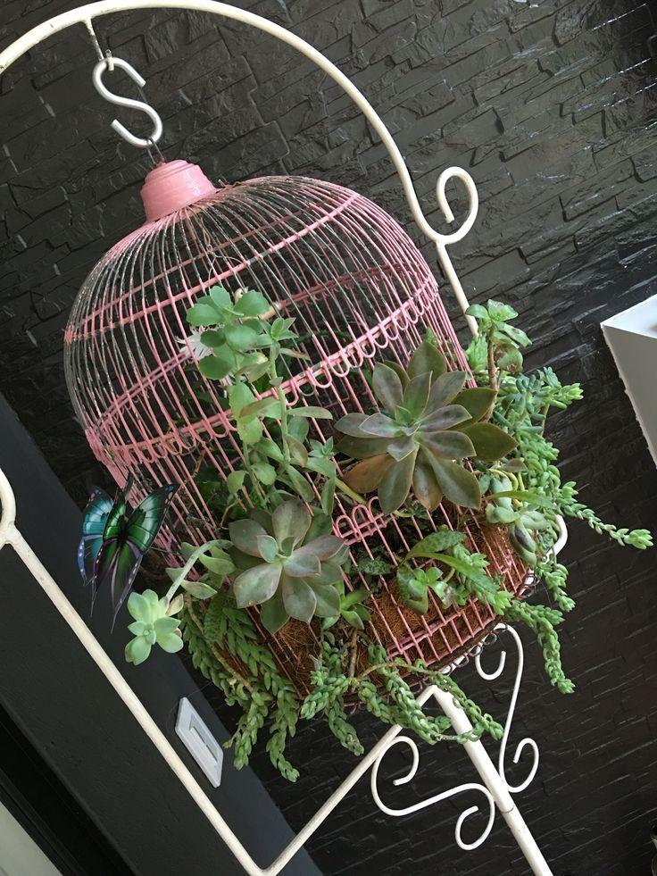 Jaula decorada con plantas, suculentas