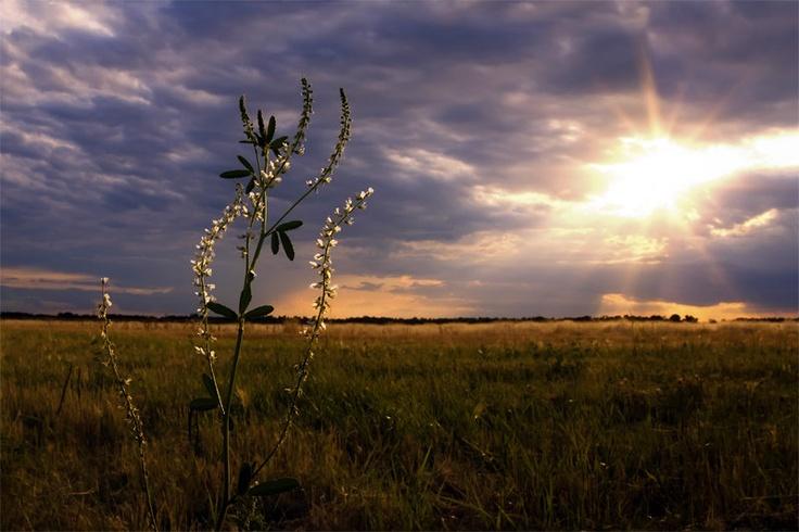 Prairie landscape to felt