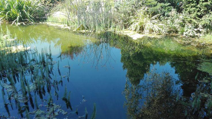 little pond, Schweintaal
