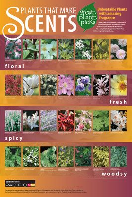 Plants That Make Scents: Link to Great Plant Picks Lists and Search Page ..... Lists of plants for shade, sun, etc.