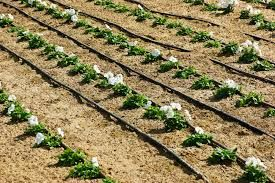 Drip irrigation supplies is one of most beneficial way for you and not much expensive. By visiting our website you can get complete information about it.