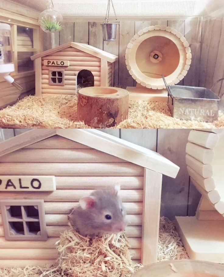 Cute set up I saw someone do, would love to try it 💕  – Hamster