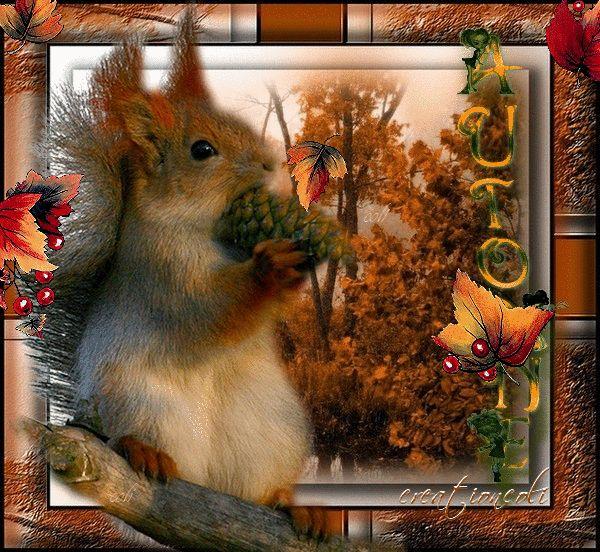Gifs couleurs d 39 automne recherche google l 39 automne pinterest gifs anime and search - Images d automne gratuites ...