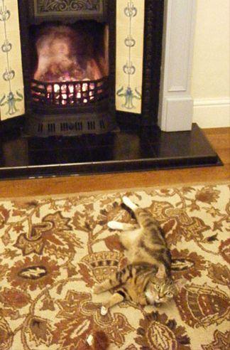 Quand l\u0027art du camouflage est plus ou moins maîtrisé. Un chat quasi  invisible