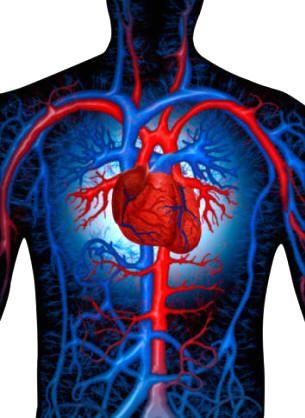 El sistema circulatorio es un conjunto de vasos, arterias, venas, capilares sanguíneos y vasos linfáticos, que distribuyen los líquidos internos impulsados por un corazón