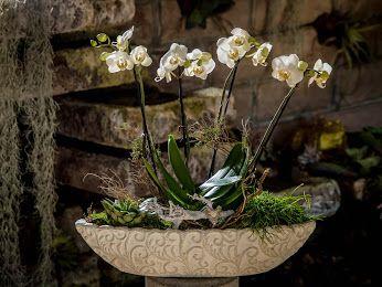 Unbeschwertheit Ist Ein Schiff, Mit Dem Man Viele Stürme Durchkreuzen Kann.  #Orchideen #. OrchideenDeko