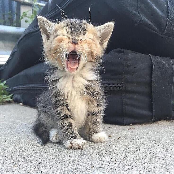 Sweet Cats Of Instagram Catsofweek Instagram Posts Videos Stories On Bildgram Com Bildgram Mom And Her Kitty Check Us On Youtube Link In Bio Kittens Cutest Cute