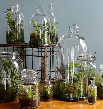Not green, but idea of collection of bell jars and apothecary jars