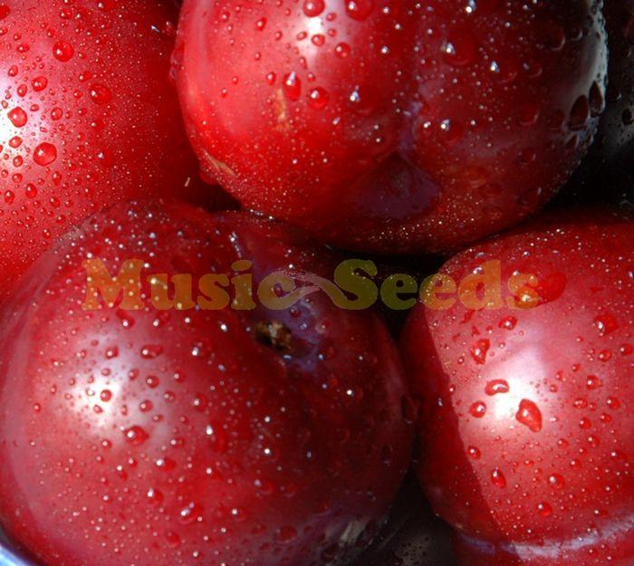 1 пакета(ов) = 10 шт. японский фиолетовый семена экзотические вкусные семена дерево бонсай детский DIY плантатор дома и сада бесплатная доставка купить на AliExpress