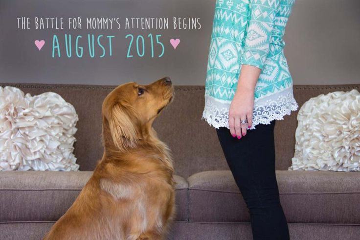 We are having a hard time choosing a favorite! 50 Adorable Dogs Who Shared Their Family's Pregnancy News In The Best Way