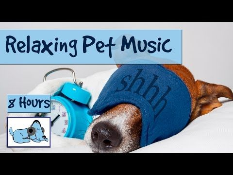Relax My Dog - Relaxing Music for Dogs - YouTube