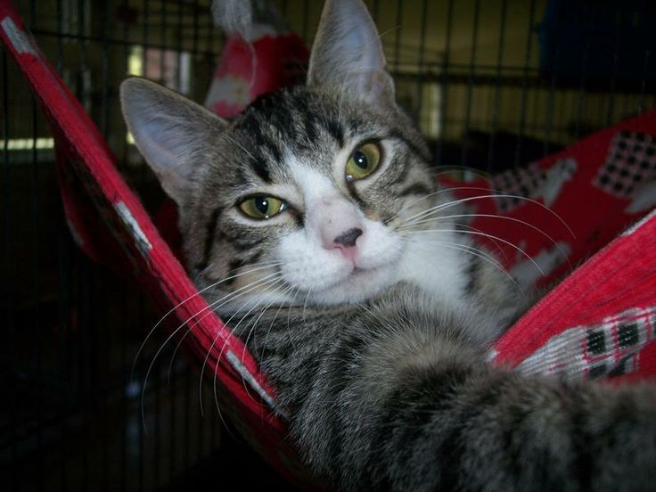 Harper, young male, laid back & ready to roll.