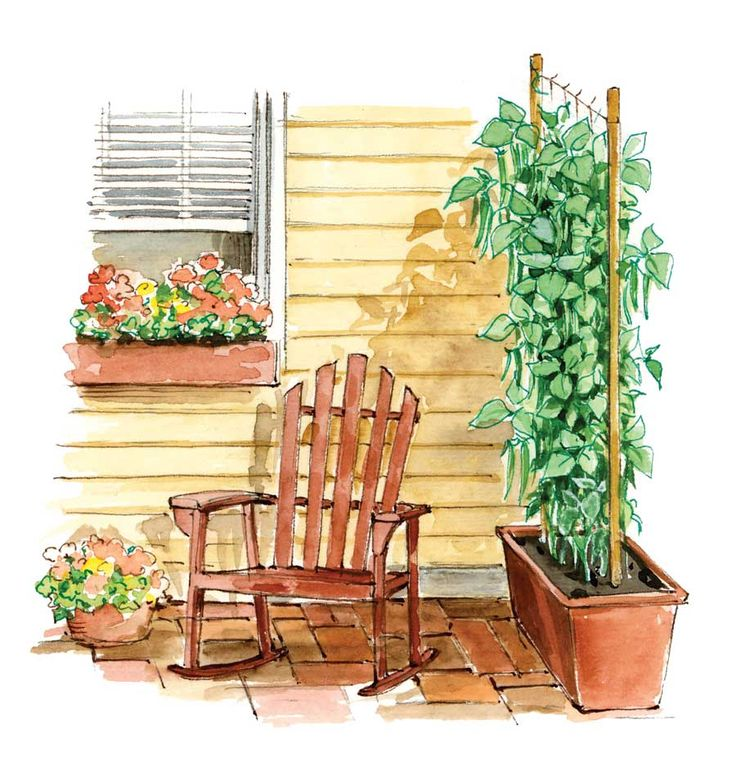 Vining crops grown in containers can double as a sunshade on your patio. Illustration by Elayne Sears. From MOTHER EARTH NEWS magazine.