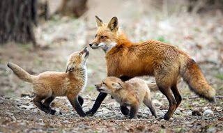 ΖΩΑ: Όταν η φύση έχει κέφια: Αυτές είναι οι πιο ξεκαρδι...
