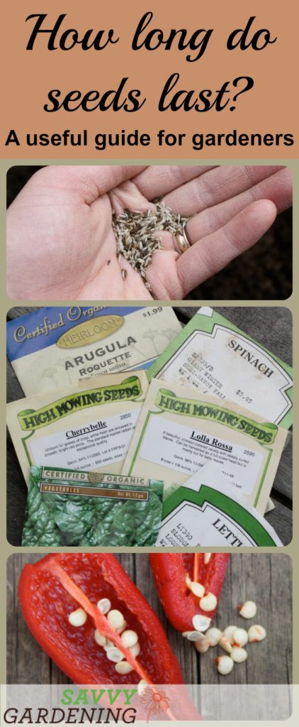Not sure if your seeds are too old to plant? Use this handy guide to help you determine how long seeds last.