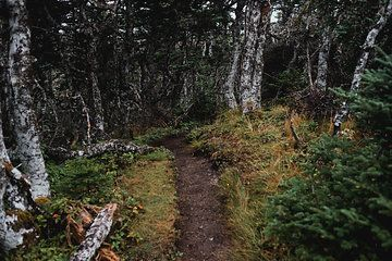 Photo from 2017 Collection Newfoundland Prints collection by Jenny Thompson Photography #canada150 #skerwinktrail #hiking