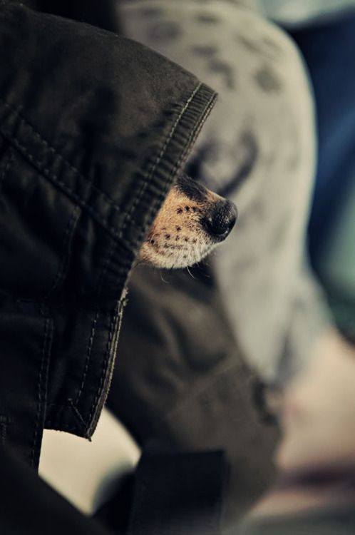 nose.Dogs Nose, Real Life, Little Puppies, God Is, Hoods, Gangsters, Baby Dogs, Trench Coats, Animal