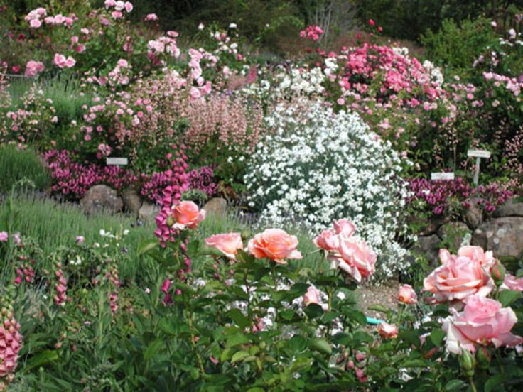 Rose Garden Ideas, Garden