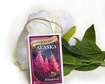Epilobium angustifolium semi-matrimonio seme pacchetti-fiore semi-semi di semi di pacchetti-wild pacchetti-seme Bomboniere Matrimonio Bomboniere-alaska fiori selvatici-wildflower