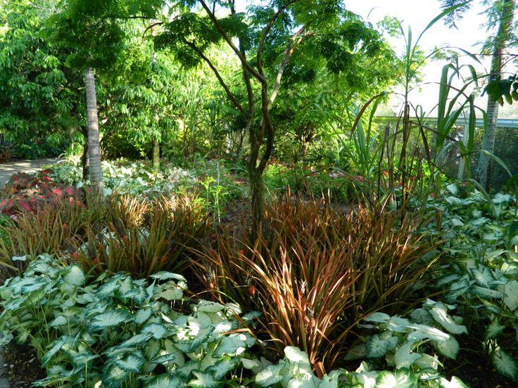 Med Caladiums Pineles Brazilian Garden Naples Botanical By Muses A Toronto Gardening Blog