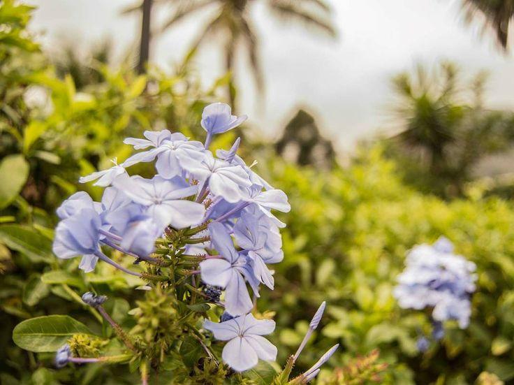 Fotografía tomada en el hotel Jardines del Lago, Panajachel, Sololá.  #naturaleza #nature #green #photographer #photooftheday #photo #picoftheday #pic #photography #art #color #flower #Guate #perhapsyouneedalittleguatemala #me #passion #sky #pana #Solola #camera #beautyday #beauty #beautiful #mypasion #sun #love #live http://tipsrazzi.com/ipost/1516371473802457587/?code=BULO9JDh_Hz