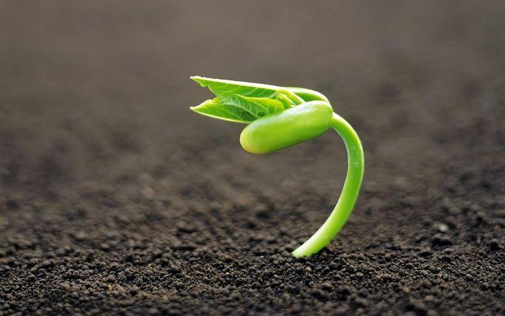 Sermão Sobre O Crescimento Espiritual - Metas Para O Crescimento Espiritual
