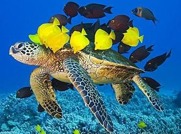 "ARTEUALIDADES DA WEB: Atualidades - Preservação Marinha + Os mares e oceanos compreendem aproximadamente 71% da superfície terrestre, permitindo a existência de diferentes ecossistemas aonde encontramosrepresentantes de diversos grupos animais e vegetais. A conservação e preservação do ambiente marinho deve ser responsabilidade de cada ser humano e precisa começar a partir de agora.  ""No final das contas, conservaremos apenas o q amamos, amaremos somente o q compreendemos e compreenderemos…"