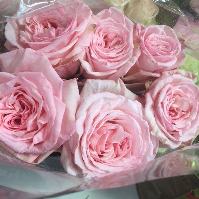 Pink O Hara Garden Rose Rose Garden Rose Garden