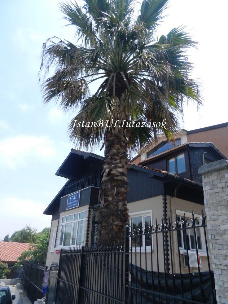 Tekinoglu ház