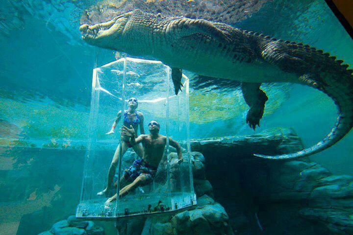 Crocosaurus Cove Aquarium, Australia- Oh, MY Goodness!