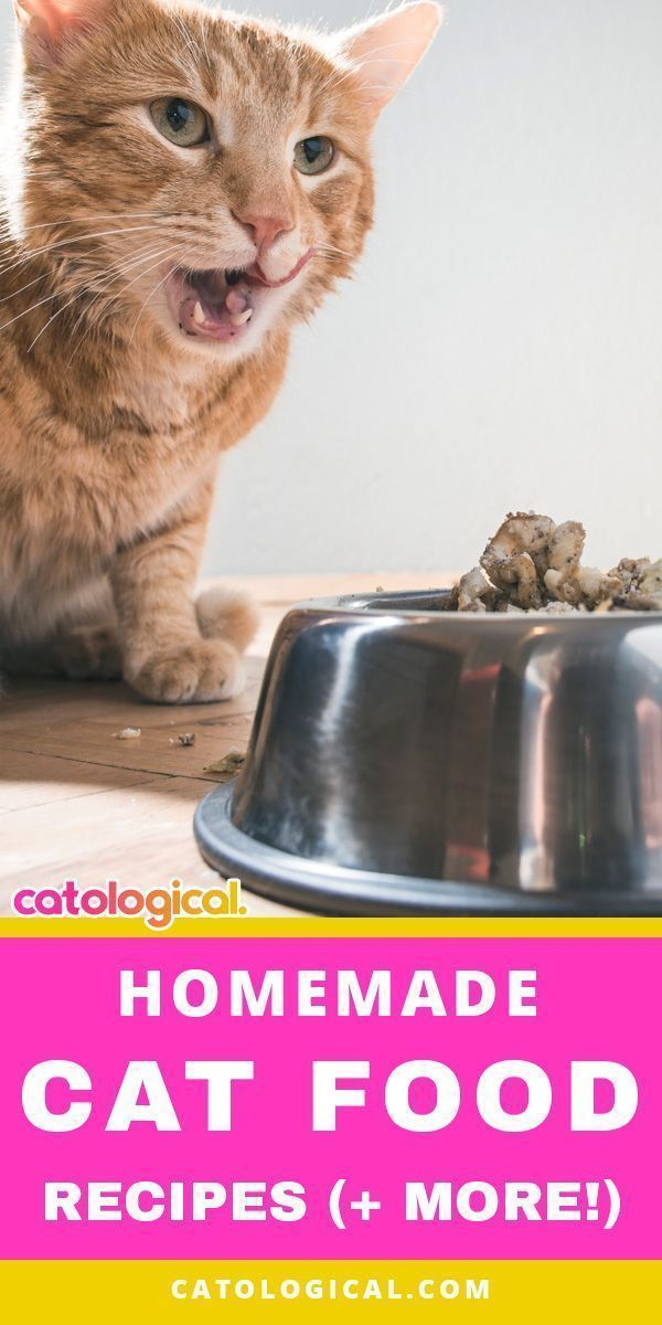 A Good Homemade Cat Food Recipe Can Be Literally The Best Thing You Feed Your Cat But If The Recipe Is Not Perfectly Accurate It Homemade Cat Food Cat Food Kitten