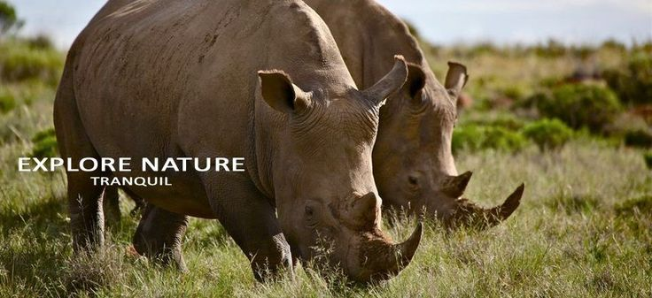 Spot Rhino at Mount Camdeboo Private Game Reserves near Graaff-Reinet in the Eastern Cape #Sight2SeeInTheKaroo