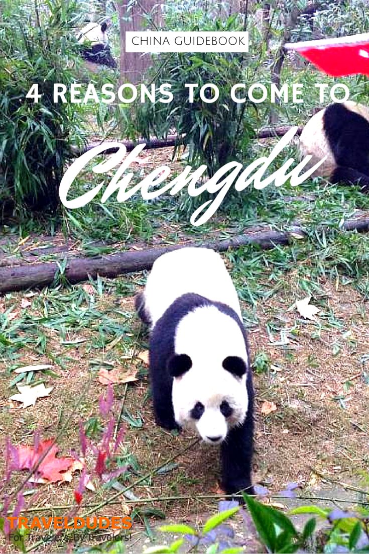 Four Reasons to Come to Chengdu - Not many have ventured into the southwestern part of the country to discover the major city and capital of the Sichuan province, Chengdu. | Traveldudes.org