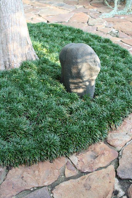 dwarf mondo grass.....Nice uniform,clean look.. Maybe around the roses?