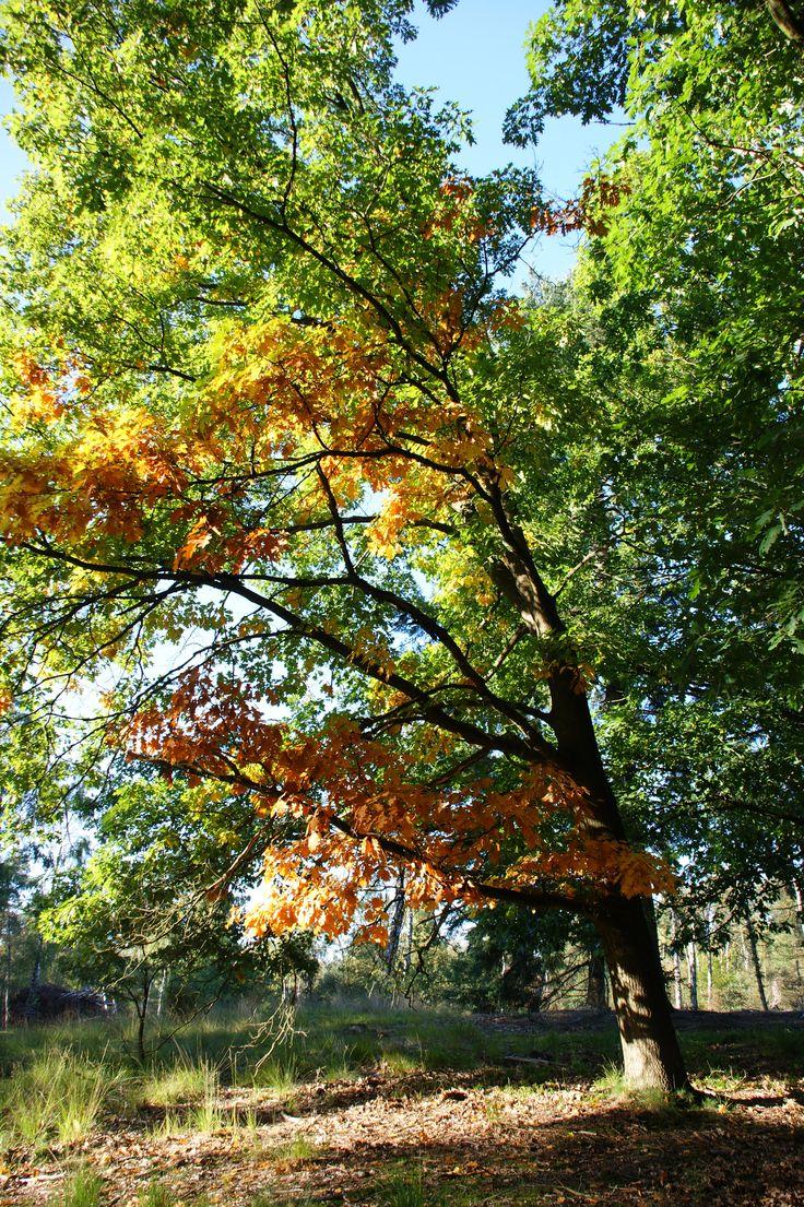 Herfst in Het Nationale Park De Hoge Veluwe
