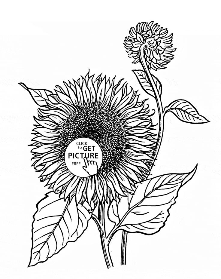 29 best Flowers coloring pages images on Pinterest | Coloring pages ...