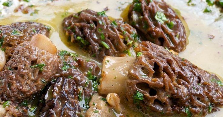 10 Morel Mushroom Recipes You Should Know [PICS]