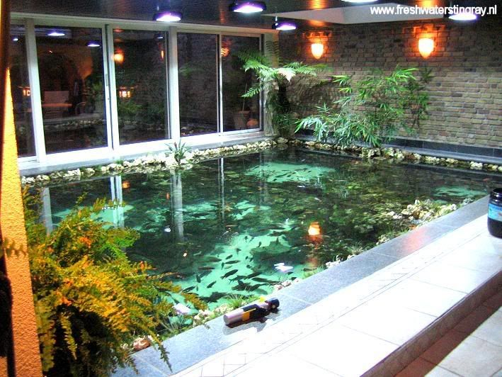 Inspirations modern indoor fish pond design to decoration for Koi pond swimming pool