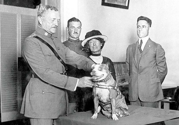 After catching the spy, Stubby made U.S. history by becoming the first dog to be promoted to sergeant through combat. He even wore the Iron Cross of the German he captured on his doggie jacket, among his many other accolades. | Sergeant Stubby Will Change The Way You Look At Your Dog
