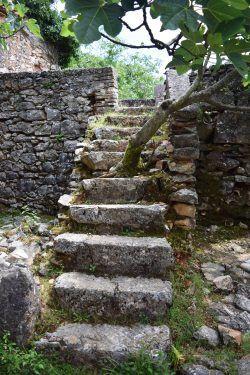 Aus einer Treppe im verlassenen Dorf Niska auf #Cres wächst ein Baum.