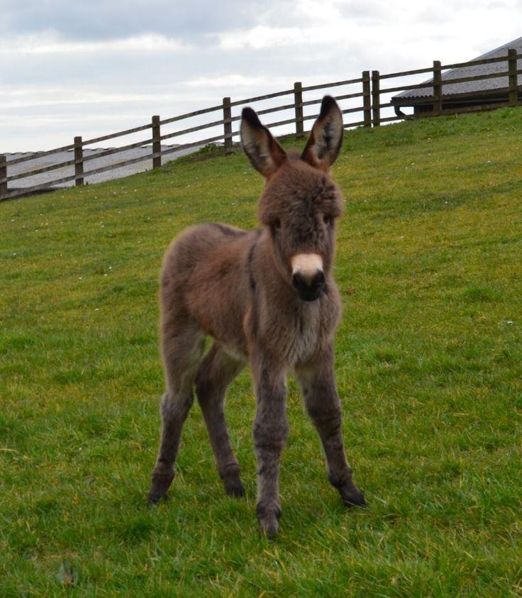 """Embedded image via Twitter """"Jamie"""" courtesy of the Donkey Sanctuary"""
