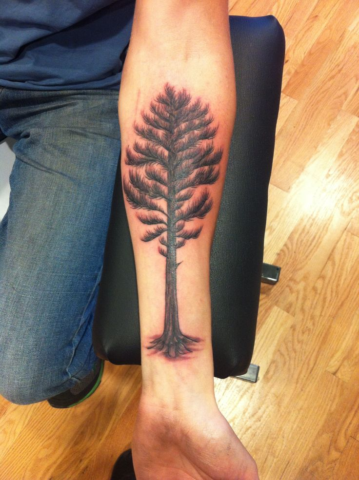 Tree tattoo by Sadie Kennedy  Northern white pine Rose Gold's Tattoo, San Francisco