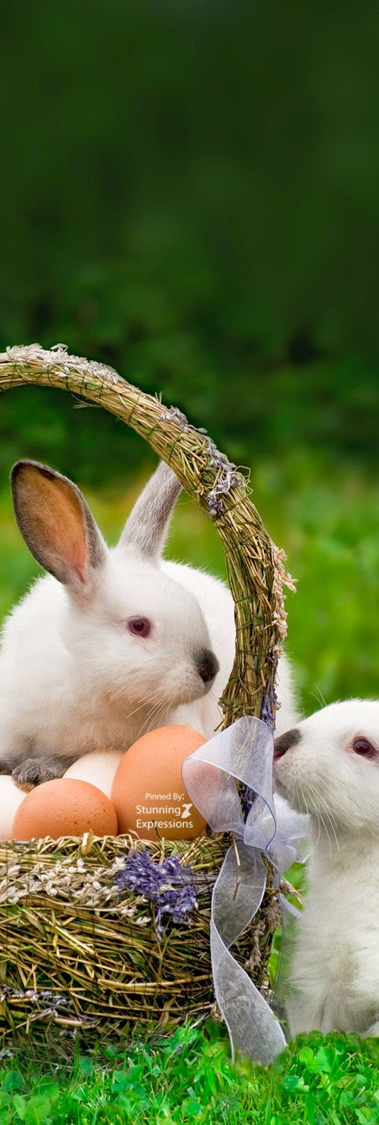 best holidays hoppy easter images on pinterest cute pics