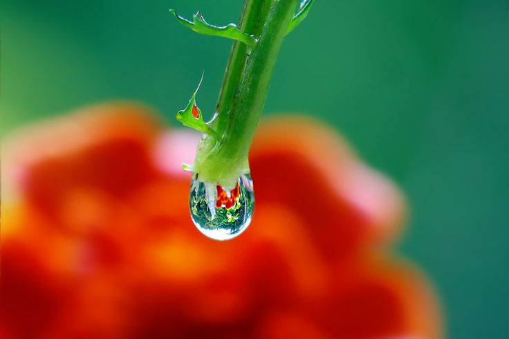 Coloured water drop 2 by Jenny Campbell on 500px